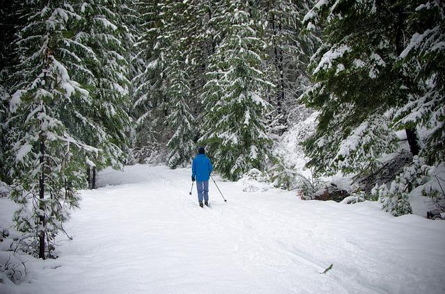 lyžování v lese