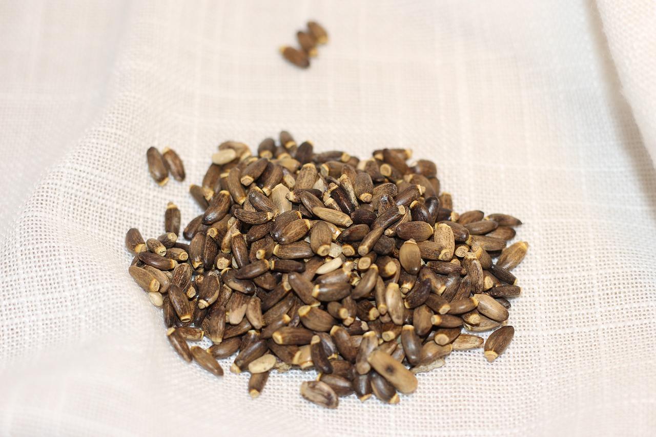 léčivé semena